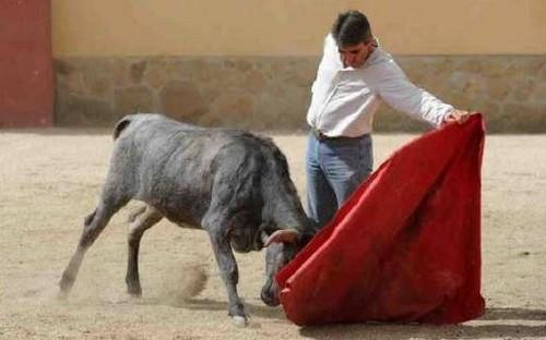 image : Victorino Martin Jr est le premier à tester son bétail - LOÏC DEQUIER